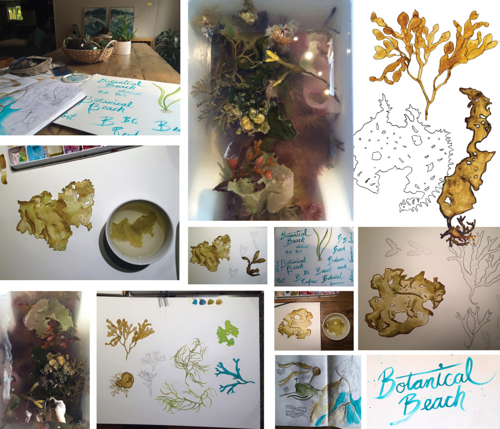 botanical beach seaweed reference illustrations